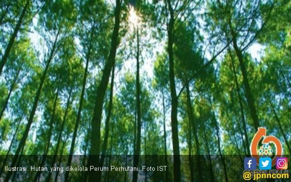 Manfaatkan Kawasan Hutan, Perhutani Gandeng Tiga BUMN - JPNN.com