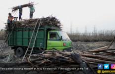 Kabar Gembira untuk Petani Tebu di Tengah Gempuran Pemanis Impor - JPNN.com