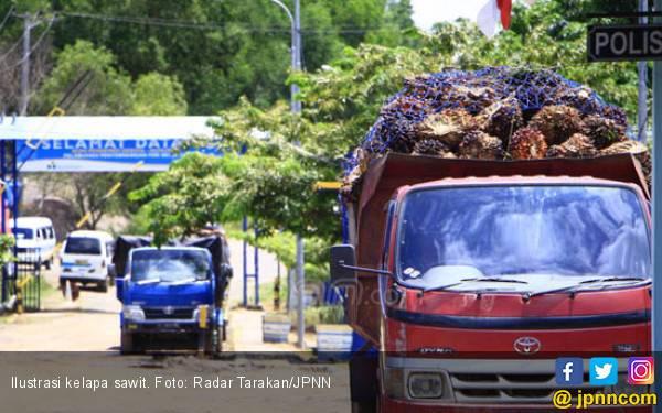 Penyebab Ekspor CPO Indonesia Hanya Naik Tipis - JPNN.com