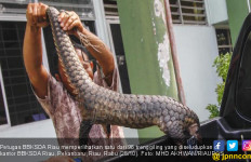 Polda Gagalkan Penyeludupan 96 Ekor Trenggiling ke Malaysia - JPNN.com