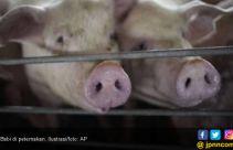 Virus Flu Babi Serang Laos dan Myanmar, Thailand Waspada - JPNN.com