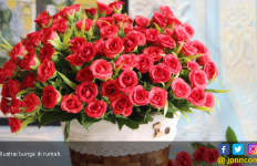 Tips Menjaga Bunga Agar Segar Lebih Lama  - JPNN.com