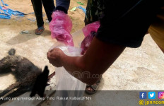 Gigit Kaki Bocah, Kepala Anjing Lepas dari Badan - JPNN.com