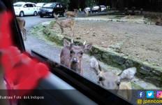 Satwa Dicekoki Miras, Pengelola Taman Safari Lapor Polisi - JPNN.com
