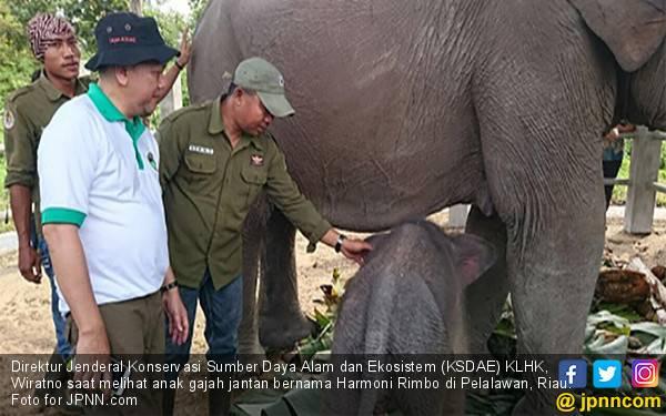 Perkenalkan, Anak Gajah Jantan Bernama Harmoni Rimbo - JPNN.com