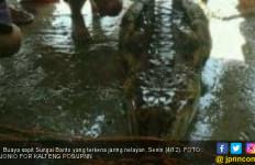 27 Tahun Tak Muncul di Sungai, Buaya Menampakkan Diri - JPNN.com