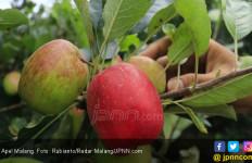 Raih 4 Manfaat Mengonsumsi Apel Setiap Hari - JPNN.com