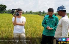 Saat Musim Paceklik, Panen Padi di Kulonprogo Malah Melimpah - JPNN.com