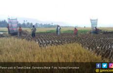 Panen Padi di Tanah Datar Menunjang Kedaulatan Pangan - JPNN.com
