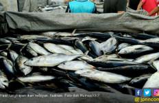15 Ton Ikan Kerapu Kembali Diekspor dari Belitung - JPNN.com