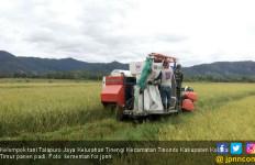 452 Hektare Sawah di Tinondo Kolaka Timur Siap Panen - JPNN.com