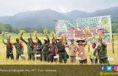 Panen Setiap Hari, Kabupaten Alor Siap Swasembada Pangan - JPNN.com