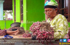 Pilu, Harga Sekilo Brambang di Pasar Cuma Rp 2 Ribu - JPNN.com
