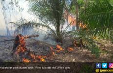 31 Ha Kebun Sawit Terbakar, Pessel Diselimuti Kepulan Asap - JPNN.com