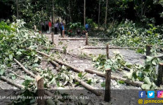 Ratusan Pohon Jati Perhutani Dihancurkan Orang Tak Dikenal - JPNN.com