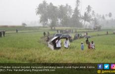 Presiden ke Sawah Saat Hujan Lebat, Arief: Nanti Pilek Lho - JPNN.com