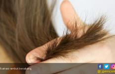 Ladies, Atasi Rambut Kering dengan 5 Bahan Alami Ini - JPNN.com