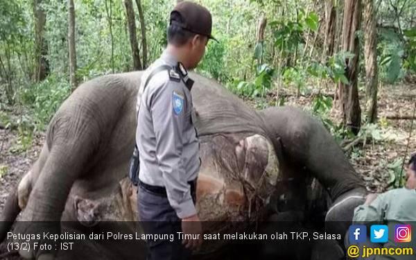 Polri Bantu TNWK Selidiki Kematian Gajah di Way Kambas - JPNN.com