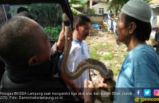 Lihat, Petugas BKSDA Sita Hewan Liar Peliharaan Warga - JPNN.com
