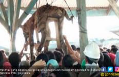 Selain Digantung, Organ Tubuh Harimau Sumatera Itu Dipreteli - JPNN.com