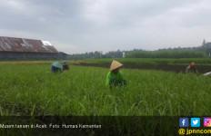 Aceh Terus Upayakan Peningkatan Pangan - JPNN.com