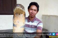 Ular King Cobra Gegerkan Warga Kalimantan, Ini Fotonya - JPNN.com