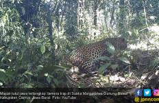 Macan Jawa Terlihat di Persawahan, Warga Dua Desa Ketakutan - JPNN.com