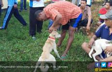 Waspada! Poso Termasuk Daerah Endemis Rabies - JPNN.com