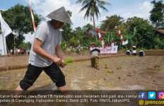 Kang Hasan Masuk ke Sawah, Urusan Nandur Masih Lincah - JPNN.com