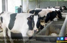 Kenaikan Produksi Susu Sulit Tembus 15 Persen - JPNN.com