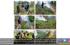 Polisi Temukan Ladang Ganja Seluas 2,5 Hektar di Madina - JPNN.com