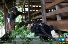Program Desa Makmur Peduli Api Dongkrak Ekonomi Rakyat - JPNN.com