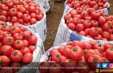 Selain Sumber Vitamin, Ini Berbagai Manfaat dari Tomat - JPNN.com