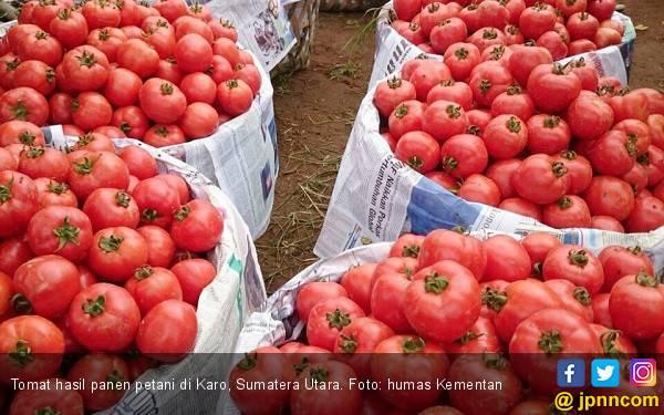 Benarkah Tomat Bisa Meningkatkan Kualitas Air Mani? - JPNN.com