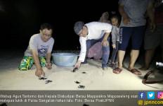 Berau Getol Lestarikan Penyu Agar Pariwisata Semakin Maju - JPNN.com