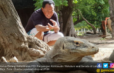 Bung Komar Beber Arti Penting Segitiga Maluku, Papua dan NTT - JPNN.com
