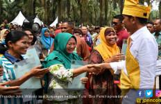 Jokowi Minta Peremajaan Sawit di Riau Segera Diselesaikan - JPNN.com