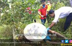 Mayat Pria Diduga Korban Pembunuhan Ditemukan di Kebun Sawit - JPNN.com