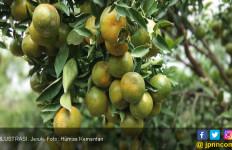 Kaya Vitamin C, Jeruk Juga Bisa Menurunkan Risiko Kanker - JPNN.com