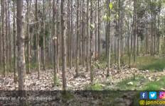 Ada yang Sengaja Bakar Hutan Jati - JPNN.com