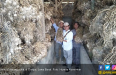 Sebegini Besaran Kenaikan Harga Bawang Putih di Cianjur - JPNN.com