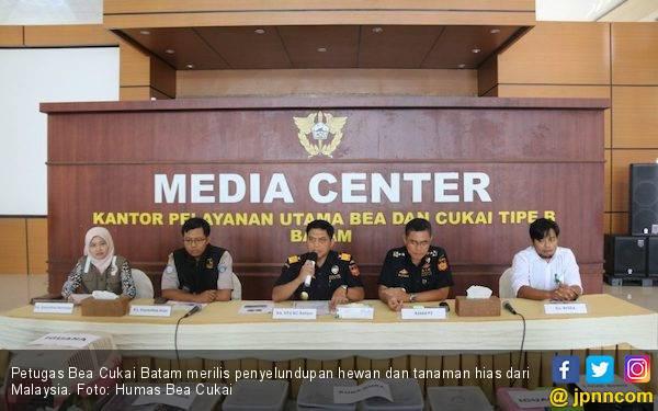 Penyelundupan Hewan dari Malaysia Berhasil Digagalkan - JPNN.com