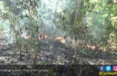 Waspada! Hutan Jati Mudah Terbakar - JPNN.com