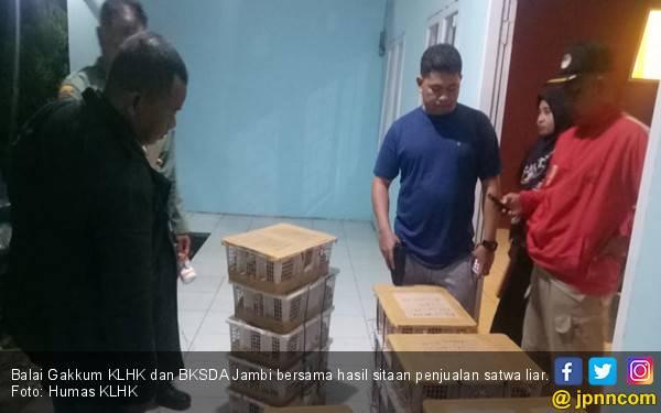 Selama Dua Tahun, Gakkum KLHK Tindak 536 Pelaku Peredaran Ilegal Satwa Liar - JPNN.com