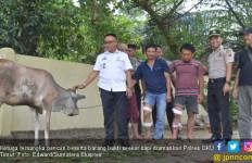 Tiga Pencuri Sapi di Martapura Ambruk Diterjang Peluru - JPNN.com