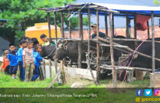 Stok Hewan Kurban Lebih Dari Cukup - JPNN.com