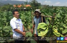 Misbakhun Doakan Petani Tembakau di Dapilnya Makin Sejahtera - JPNN.com
