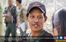 Hutan Produksi Kemampo, Tumpuan Harapan Warga Banyuasin - JPNN.com