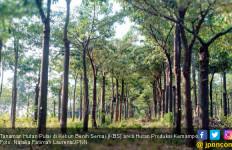 Kebun Benih Semai, Selamatkan 3 Tanaman Asli Bumi Sriwijaya - JPNN.com