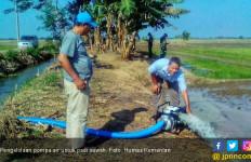 Pengelolaan Pompa Air Selamatkan Padi Sawah di Karawang - JPNN.com